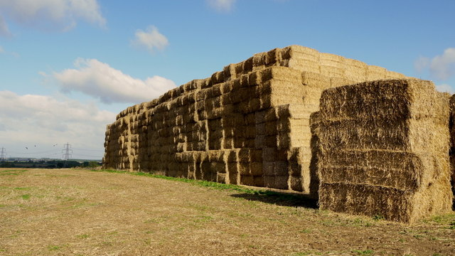 Straw stockpile at Water Newton Lodge