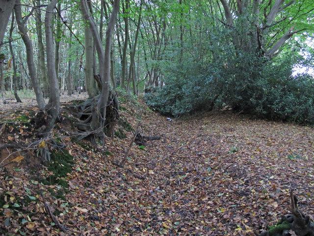 Fryerning Wood boundary with Mapletree Lane