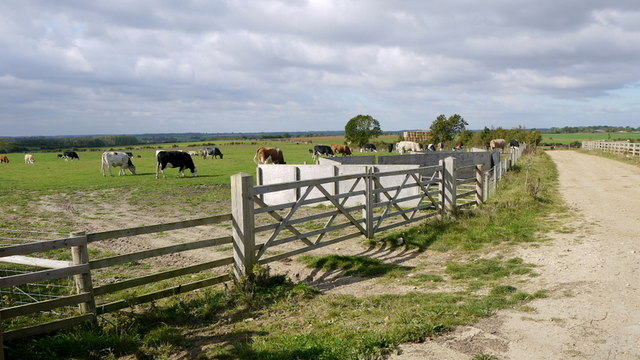 Pastoral scene; North Cambridgeshire