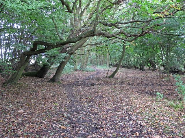 Mapletree Lane, near Fryerning Wood