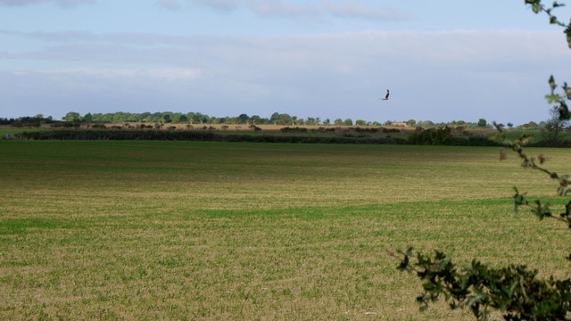 Kite over farmland