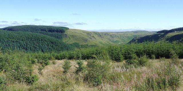 Forestry above Cwm Irfon, Powys