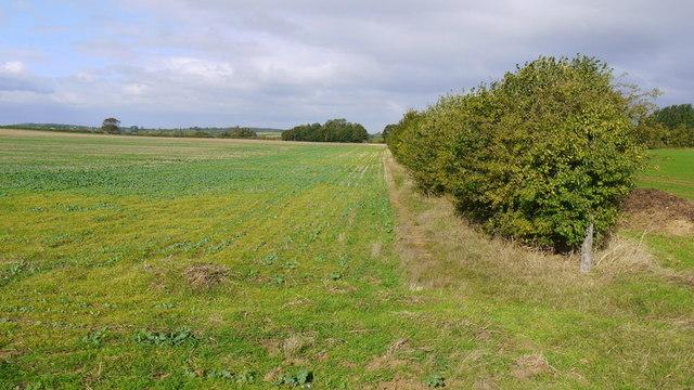 Flat farmland near the Nene