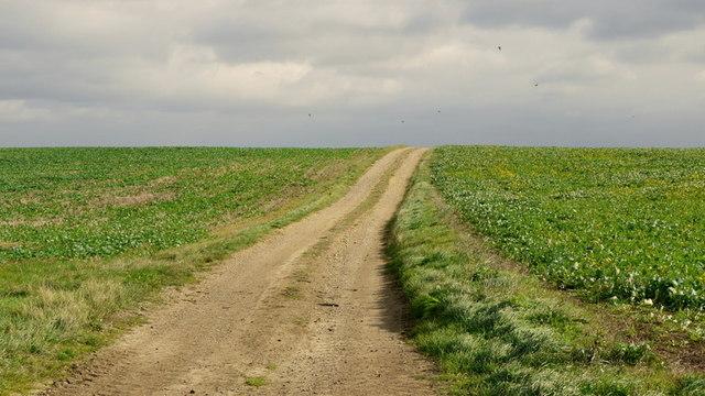 Farm track on Newton Hill