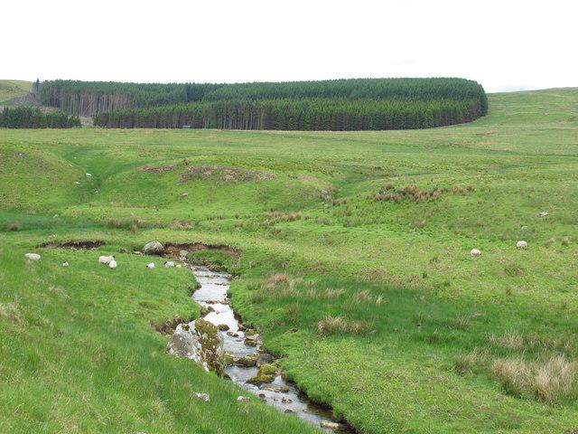 The valley of Cottonshope Burn below Hollin Burn Plantation