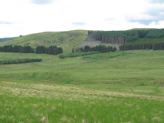 The valley of Cottonshope Burn below Hollin Burn Plantation (2)