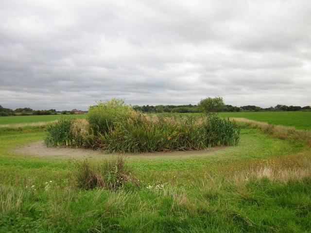 Dry Pond at Lea Newbold