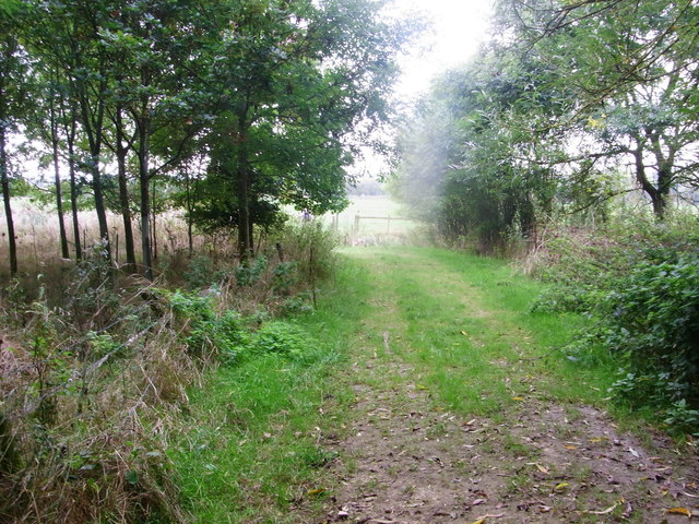Through the copse to the meadow