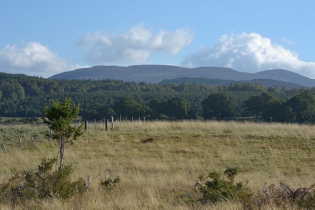 Rough grazing north of Coylumbridge