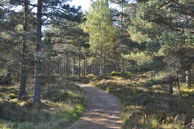 Track into forest