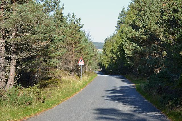 The Loch Garten road