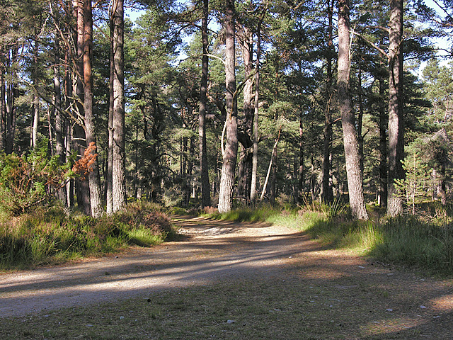 Track junction in the Abernethy Forest