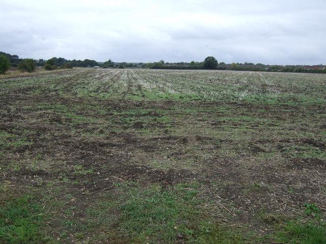 Farmland off Meadow Drove