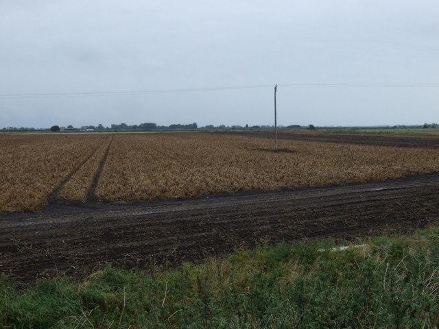 Crop field off Spalding Road