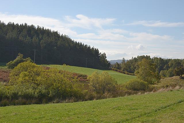 Fields and tree near Aundorach