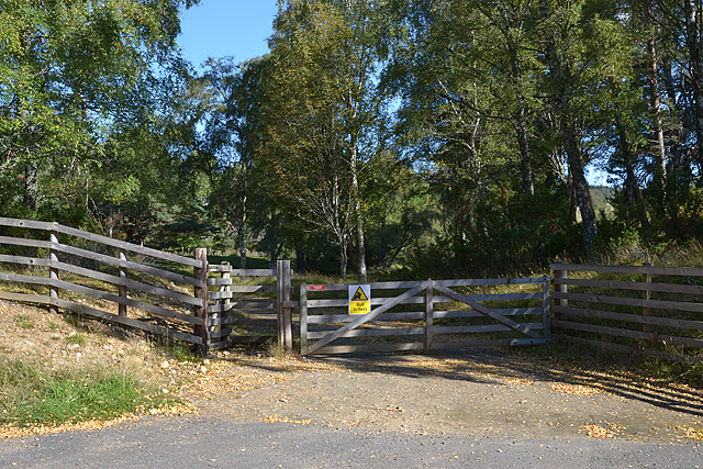 Gate into forestry