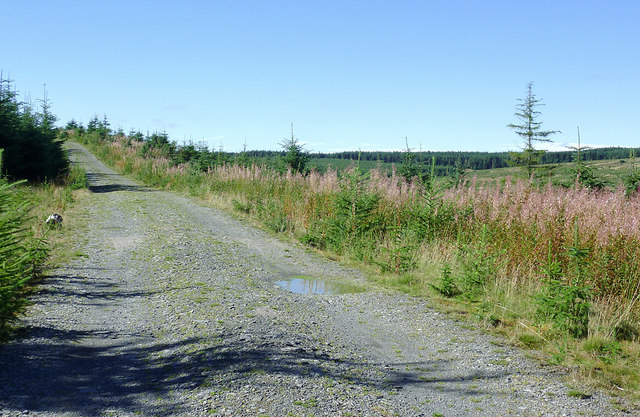 Forestry road north-west of The Devil's Staircase, Powys