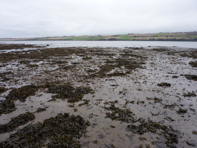 Muddy foreshore at low tide, east of the mouth of the River Sgitheach