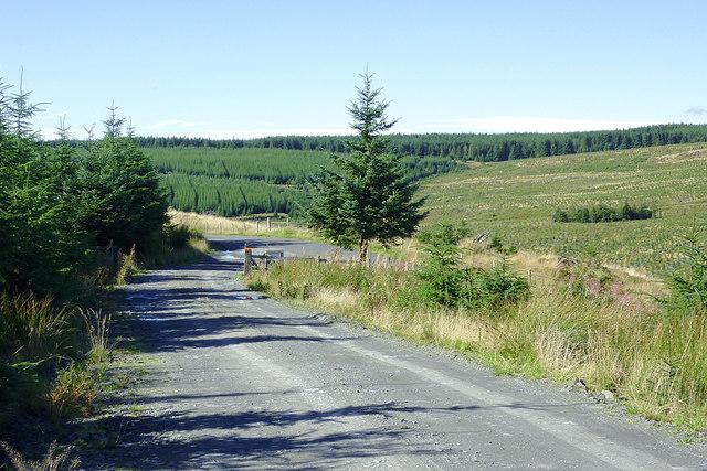 Forestry road south of Cwm Nant y Cloddiad, Powys