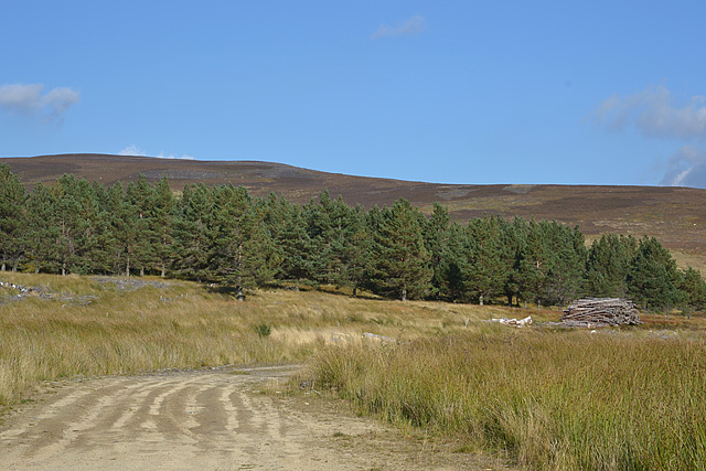 Forestry and moorland near Muckerach