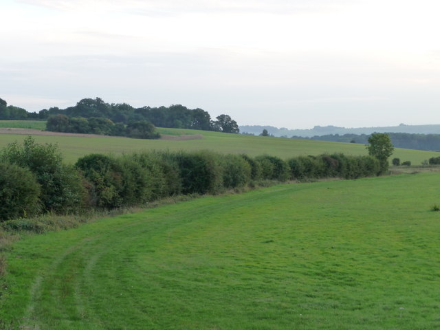 Hedge along Peartree Bottom