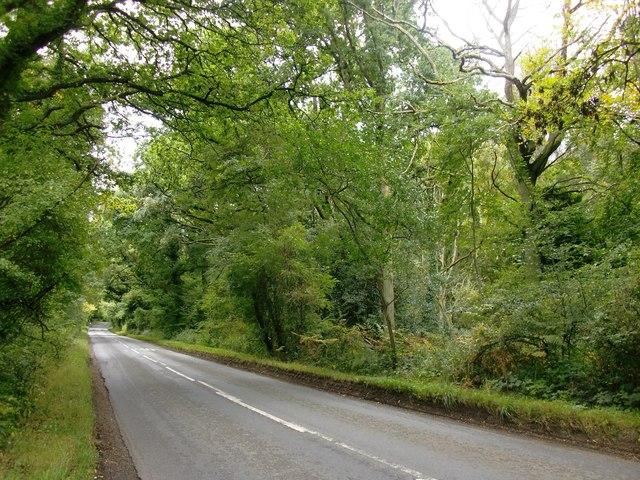 Road across Moorend Common
