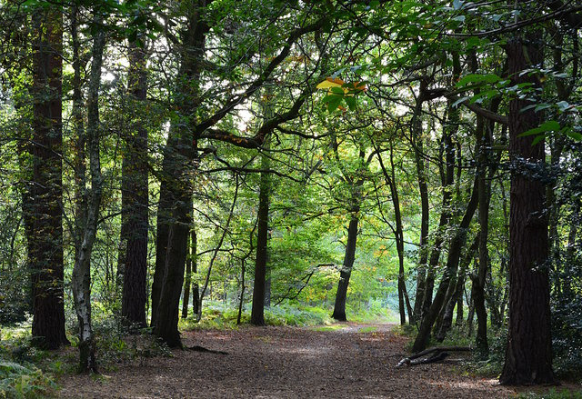 Bridle path in the middle of Pamber Forest, Hampshire