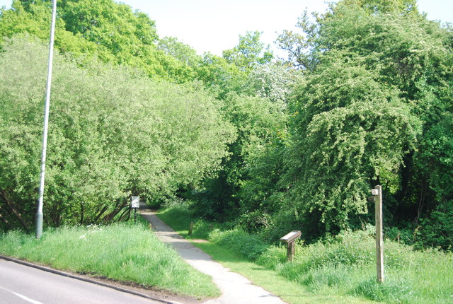 Footpath, Rusthall Common
