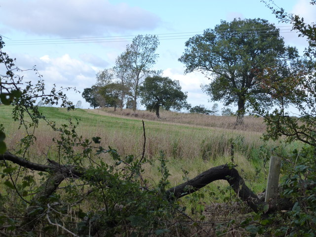 Looking out of Monks Wood