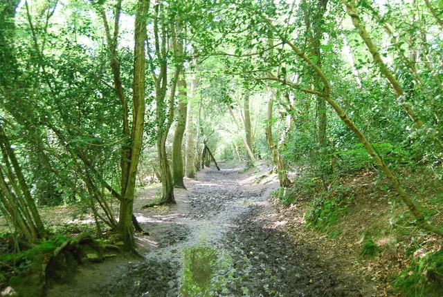 Footpath to Hurst Wood