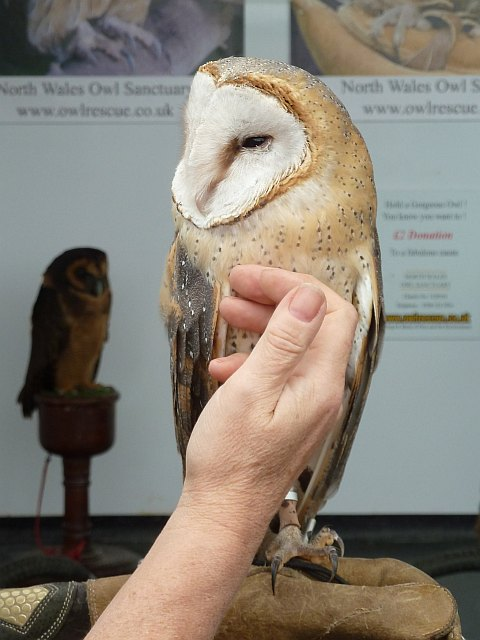 North Wales Owl Sanctuary stand at Llanfair Show