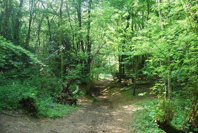Footpath, Hurst Wood