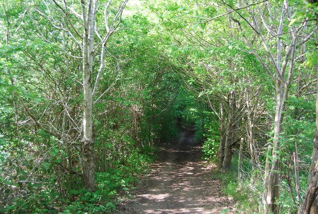 Footpath to Smockham Farm