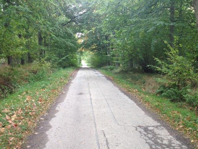 Road through Brahan Estate
