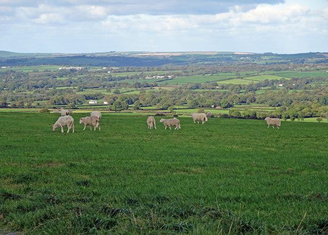 Sheep pasture, Eglwyswen