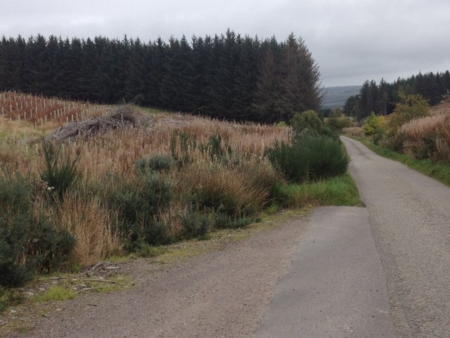 Minor road and forestry near Maryburgh