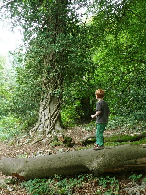 A magic tree at Killerton