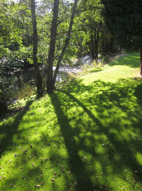 Trees and grass by the Lynher
