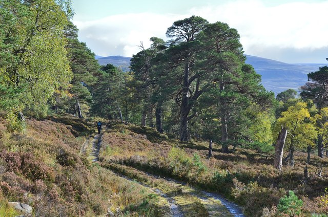 Track to Mar Lodge