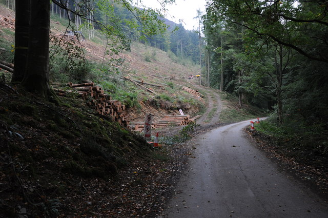 Forestry work above Lake Vyrnwy