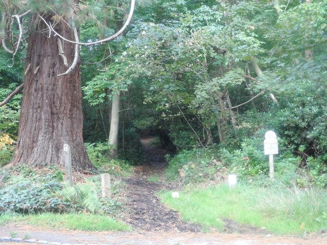Bridleway enters Simon's Wood