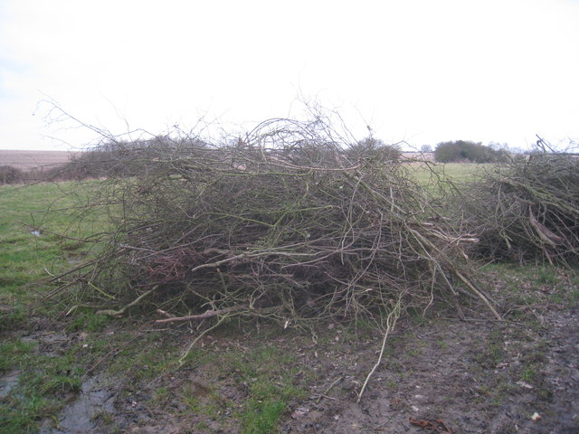 The remains of the old hedge
