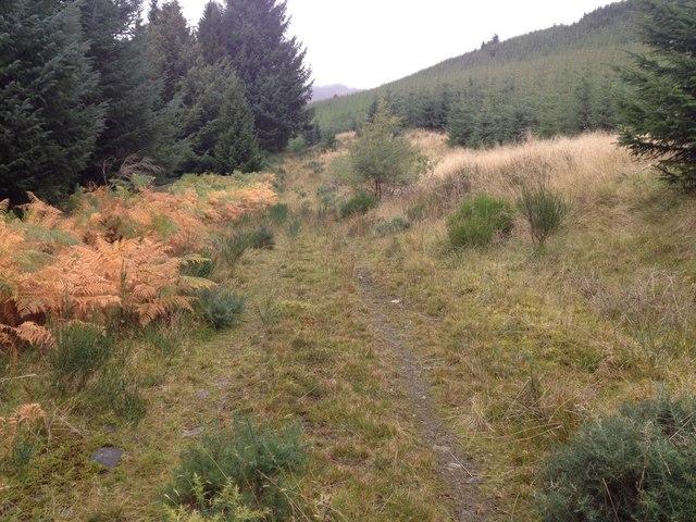 Overgrown forestry track in Glen Glass