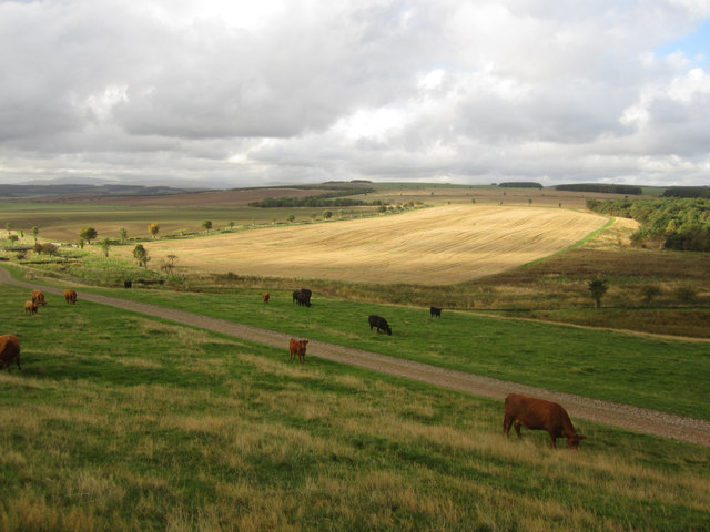 Looking across the Hetton Burn valley