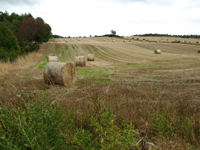 Big bales in fields by Aquhythie Wood