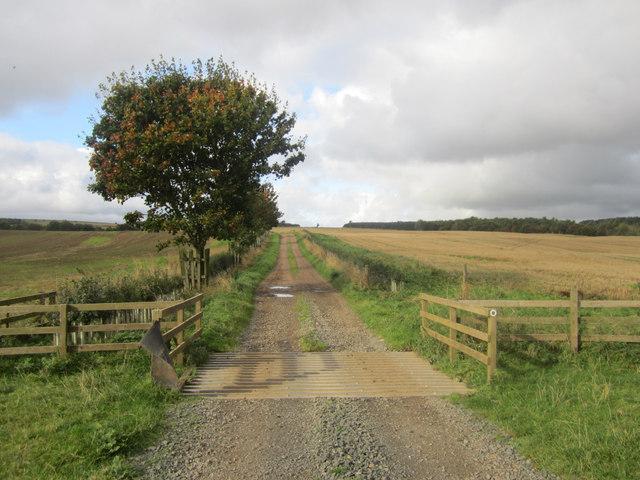 Farm track towards Horton