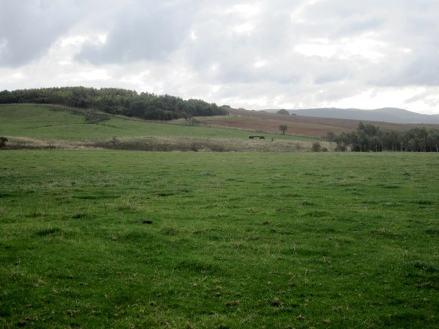Grassland on Football Moor