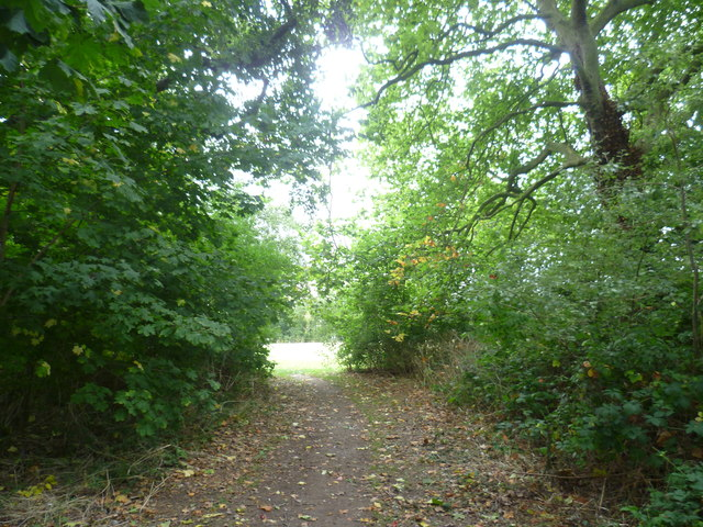 Path through the woodland at Pickhurst Green