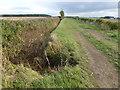 TL1582 : Bullock Road near Grange Farm by Richard Humphrey