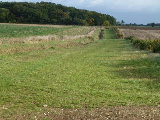 Bullock Lane and Aversley Wood near Sawtry